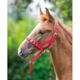 Halter foal